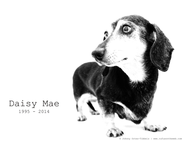 Daisy Mae | June 2011.  Photo by: Johnny Ortez-Tibbels ©