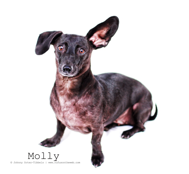 Molly | August 2012.  Photo by: Johnny Ortez-Tibbels ©