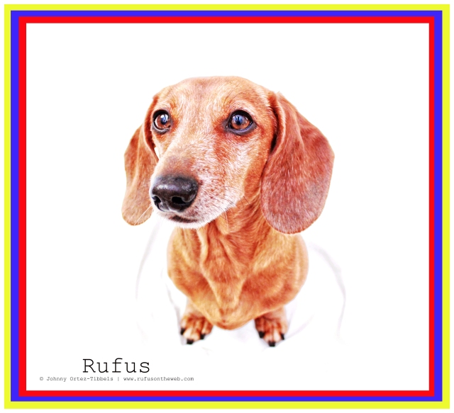 Rufus | 2011.  Photo by: Johnny Ortez-Tibbels ©