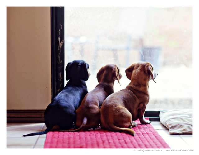 Emily, Lily & Rufus   August 2014.  Photo by: Johnny Ortez-Tibbels ©