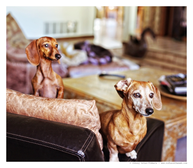 Lily & Rufus | August 2014.  Photo by: Johnny Ortez-Tibbels ©