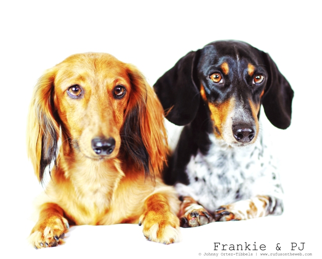 Frankie & PJ | August 2014.  Photo by: Johnny Ortez-Tibbels ©