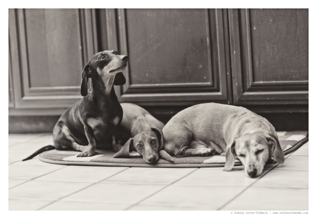 Emily, Lily & Rufus | August 2014.  Photo by: Johnny Ortez-Tibbels ©
