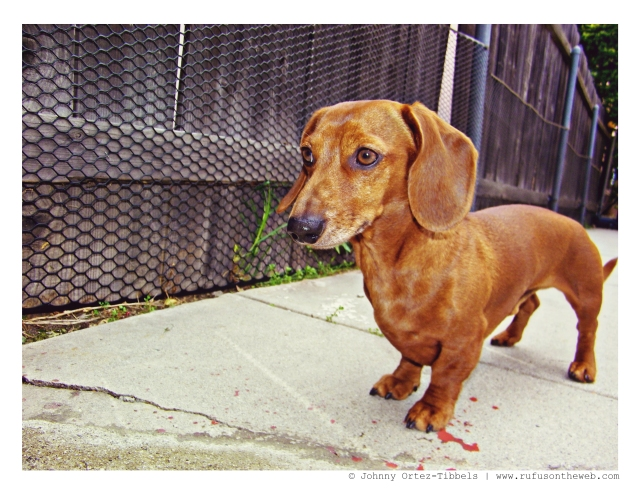 Rufus | 2009.  Photo by: Johnny Ortez-Tibbels ©