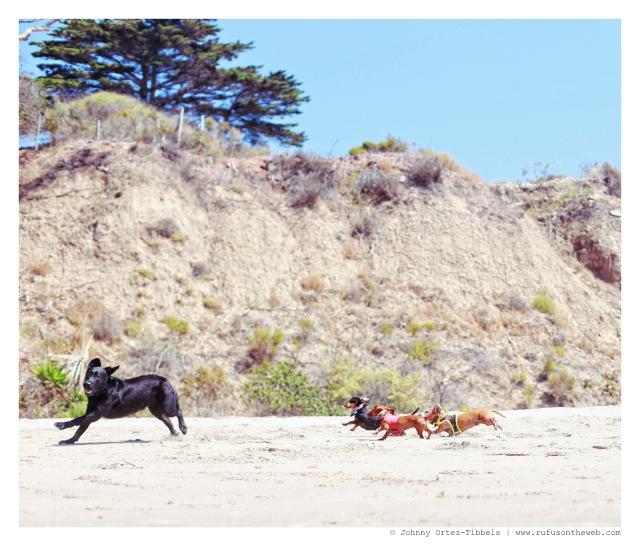 Emily, Rufus & Lily | September 2014.  Photo by: Johnny Ortez-Tibbels ©