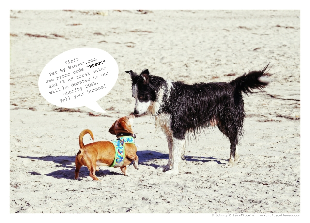 Rufus & fellow canine | October 2014.  Photo by: Johnny Ortez-Tibbels ©
