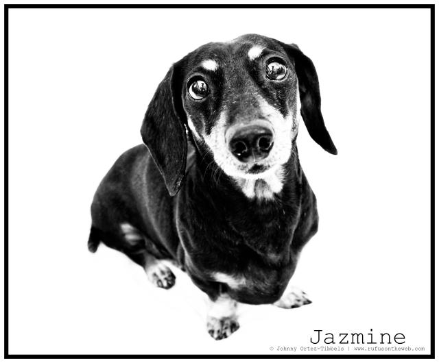 RIP Jazmine | April 2011.  Photo by: Johnny Ortez-Tibbels ©