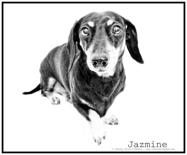 RIP Jazmine | April 2011.  Photo by: Johnny Ortez-Tibbels ©