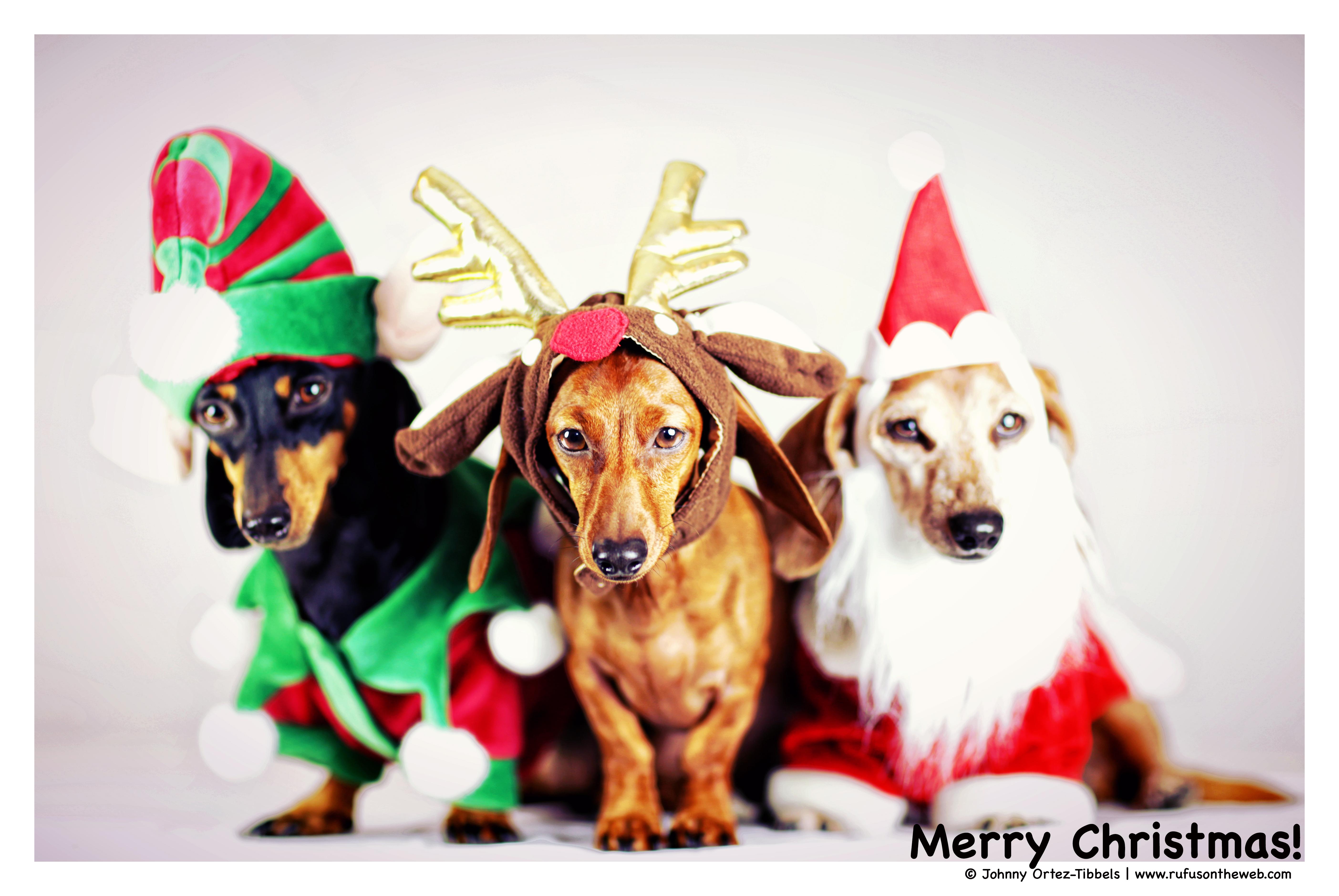 Merry Christmas 2014 | rufusontheweb