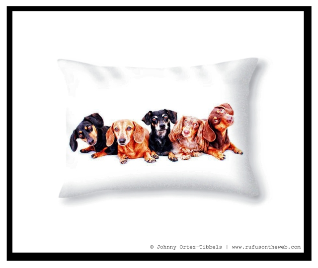 Pixels.com Dachshund Fine Art Photography Gallery | Photo by: Johnny Ortez-Tibbels ©