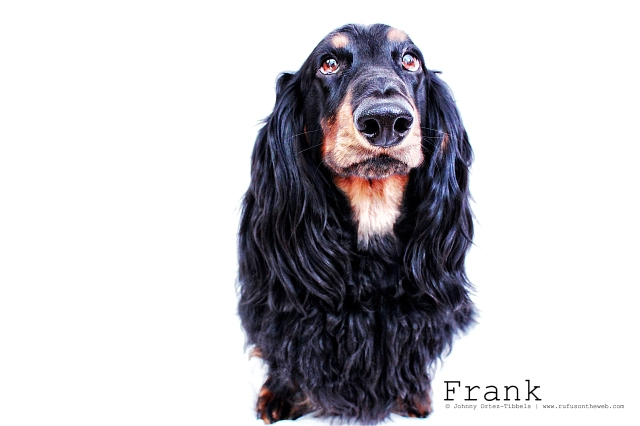 Frank | July 2011.  Photo by: Johnny Ortez-Tibbels ©