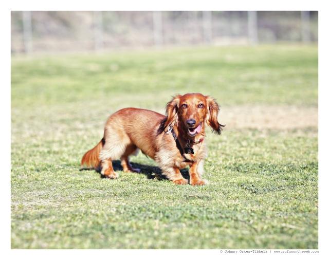 Frankie | February 2015.  Photo by: Johnny Ortez-Tibbels ©