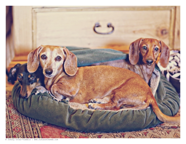 Rufus, Emily & Lily at play February 2015.  Photo by: Johnny Ortez-Tibbels ©
