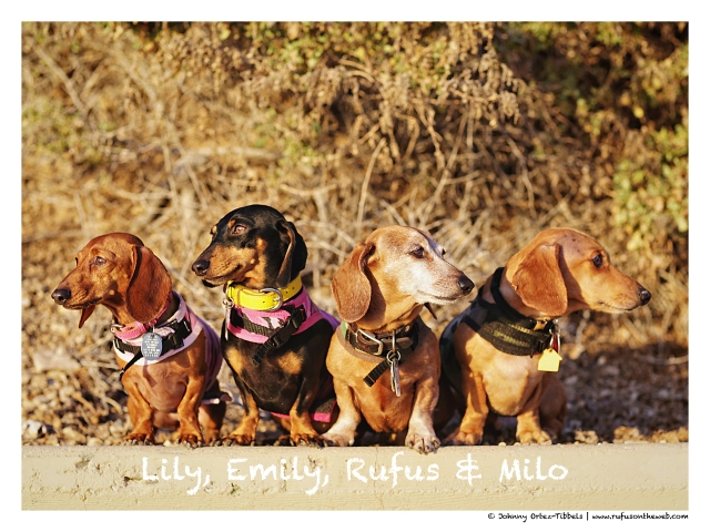 Lily, Emily, Rufus & Milo | February 2015.  Photo by: Johnny Ortez-Tibbels ©