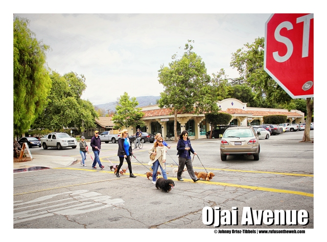 Dachshunds take Ojai Avenue | May 2015.  Photo by: Johnny Ortez-Tibbels ©