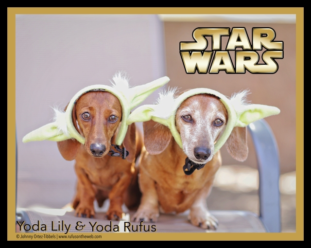 Yoda Lily & Yoda Rufus | May 2015.  Photo by: Tibbels & Tibbels ©