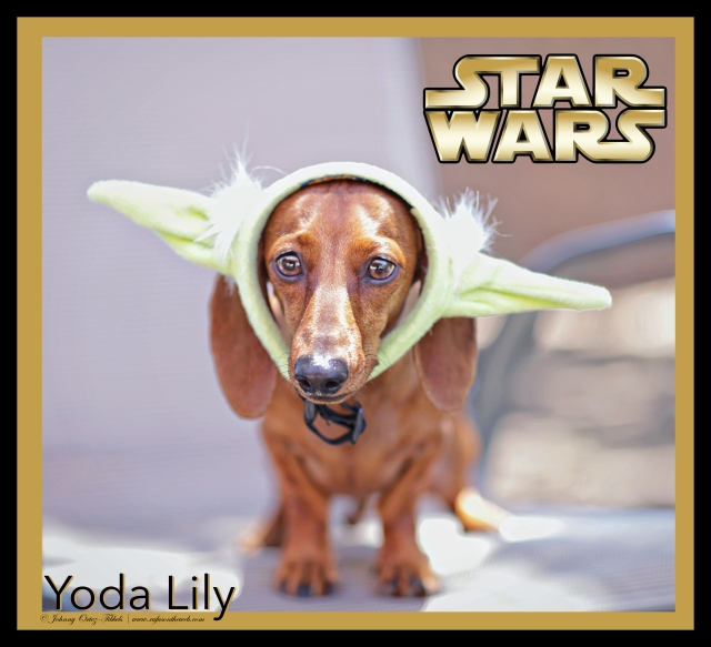 Yoda Lily | May 2015.  Photo by: Tibbels & Tibbels ©