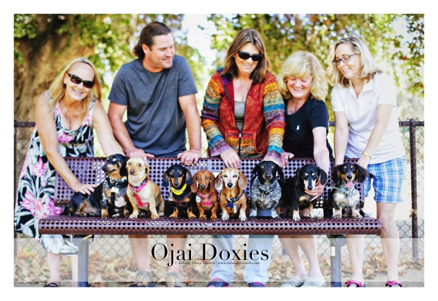 Ojai Doxies' Monthly Meetup | June 2015.  Photo by: Johnny Ortez-Tibbels ©