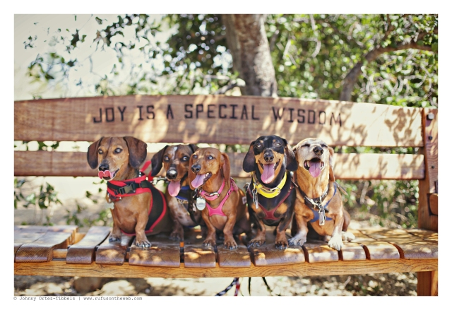 Laci, Sparky, Lily, Emily & Rufus  | August 2015.  Photo by: Johnny Ortez-Tibbels ©