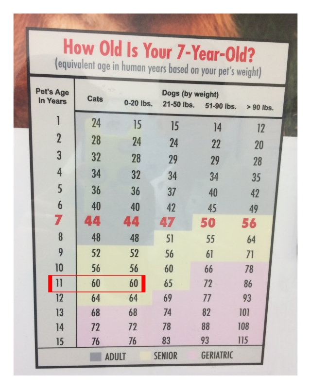 How Old Is Your Dog by Weight?
