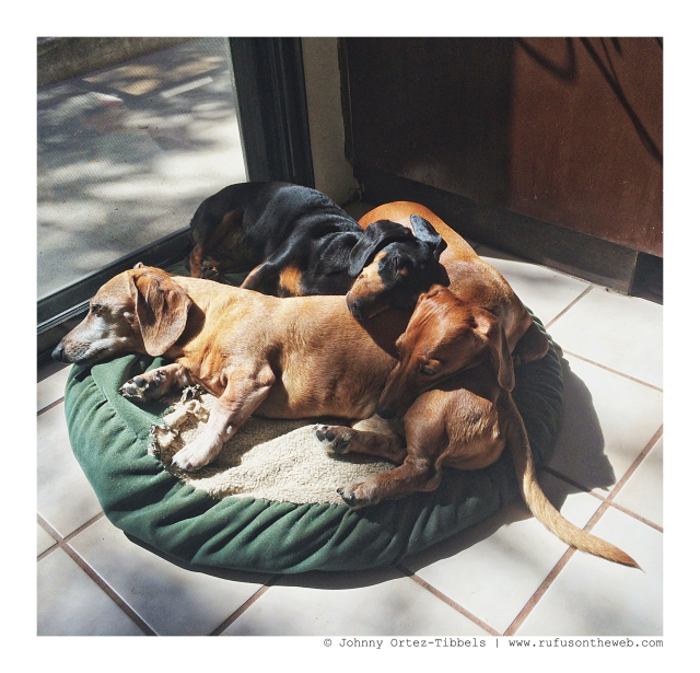 Rufus, Emily & Lily | September 2012.  Photo by: Johnny Ortez-Tibbels ©