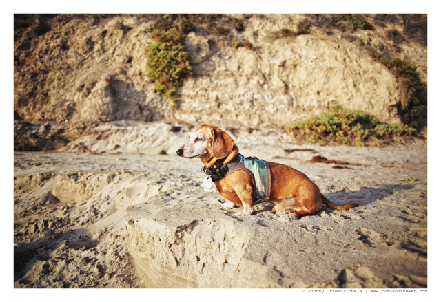 Rufus | September 2012.  Photo by: Johnny Ortez-Tibbels ©