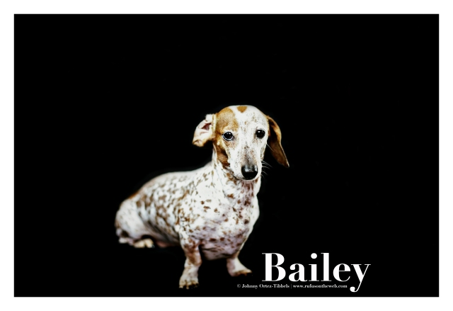 Bailey | August 2015.  Photo by: Johnny Ortez-Tibbels ©