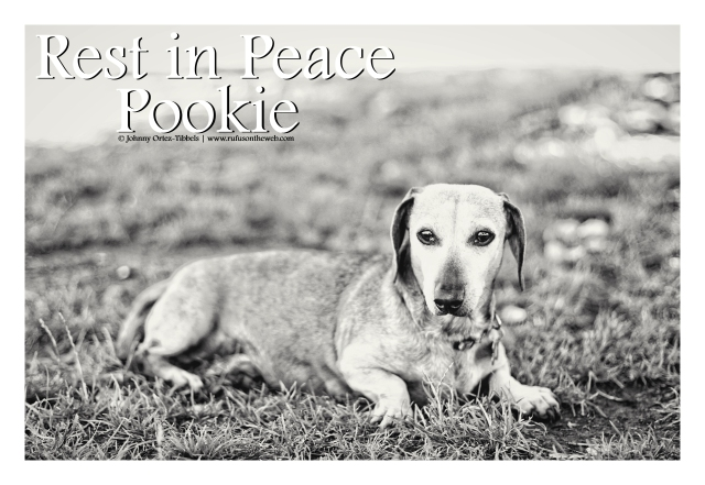Pookie | August 2012.  Photo by: Johnny Ortez-Tibbels ©