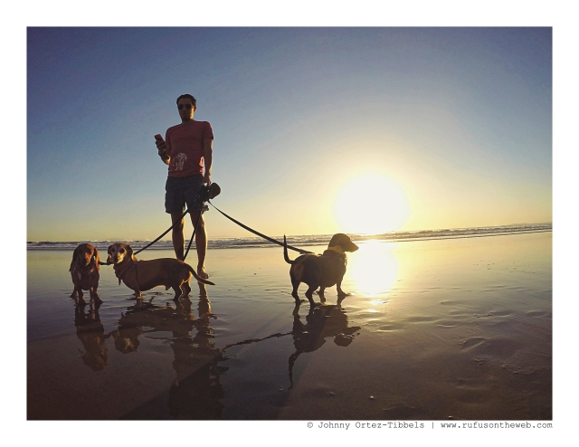 Dachshund Pack October Beach Day | October 2015. Photo by: Johnny Ortez-Tibbels ©