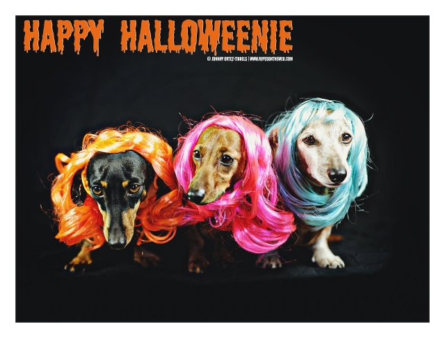 Dachshunds doing drag | October 2015. Photo by: Johnny Ortez-Tibbels ©