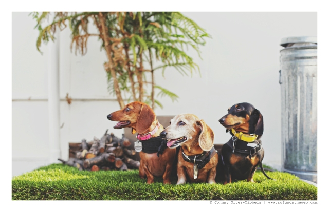 Lily, Rufus & Emily | October 2015. Photo by: Johnny Ortez-Tibbels ©