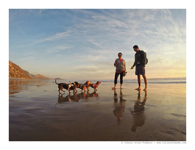 Dachshunds & their human (and family) on the beach at sunset | December 2015. Photo by: Johnny Ortez-Tibbels ©