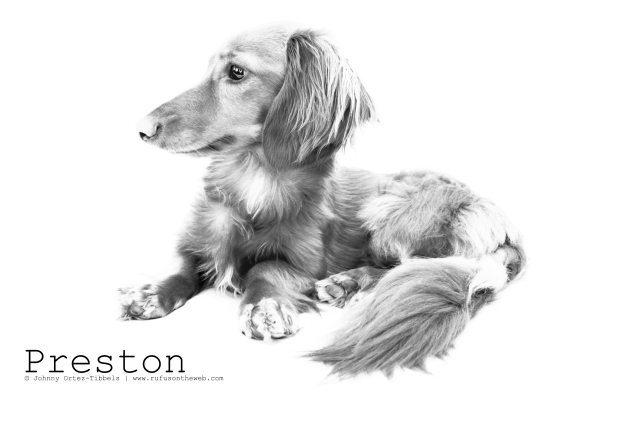 RIP Preston. Photo by: Johnny Ortez-Tibbels ©