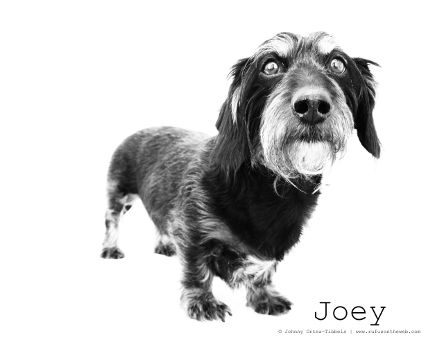 RIP Joey. Photo by: Johnny Ortez-Tibbels ©