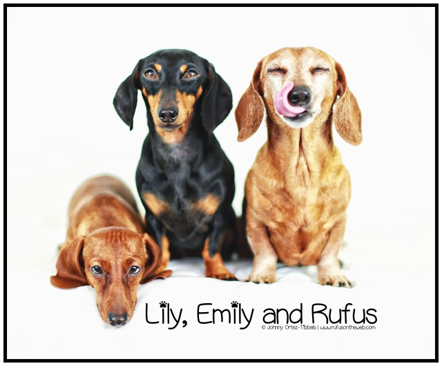 Lily, Emily & Rufus | December 2013. Photo by: Johnny Ortez-Tibbels ©