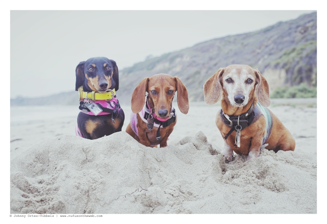 Emily, Lily & Rufus | June 2015. Photo by: Johnny Ortez-Tibbels ©