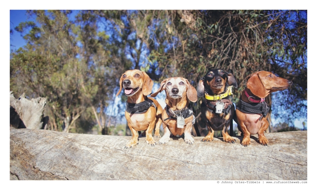 Milo, Rufus, Emily & Lily | February 2016. Photo by: Johnny Ortez-Tibbels ©