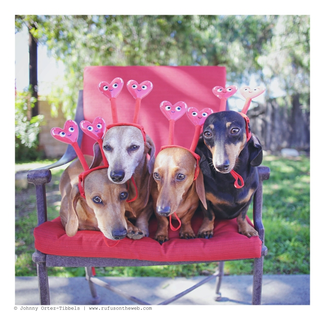 Milo, Rufus, Lily & Emily | February 2016. Photo by: Johnny Ortez-Tibbels ©