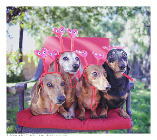Milo, Rufus, Lily & Emily   February 2016. Photo by: Johnny Ortez-Tibbels ©