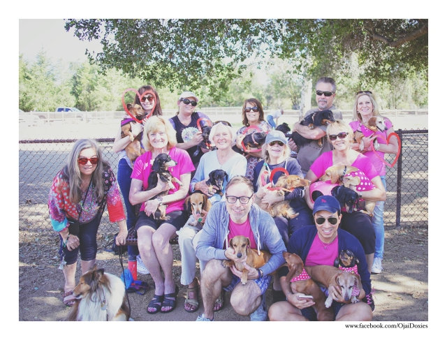 Ojai Doxies Monthly Meetup Group | February 2016. Photo by: Johnny Ortez-Tibbels ©