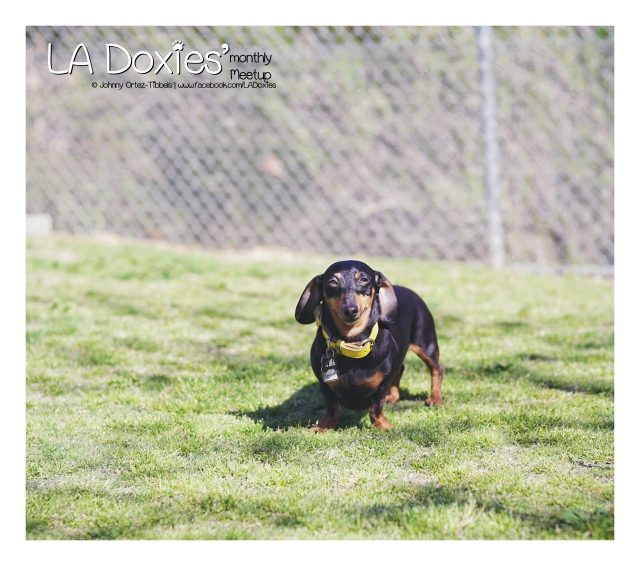 LA Doxies' Monthly Meetup | February 2016. Photo by: Johnny Ortez-Tibbels ©