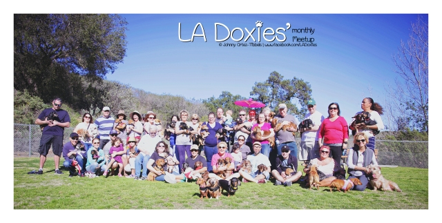 LA Doxies' Monthly Meetup Group | February 2016. Photo by: Johnny Ortez-Tibbels ©
