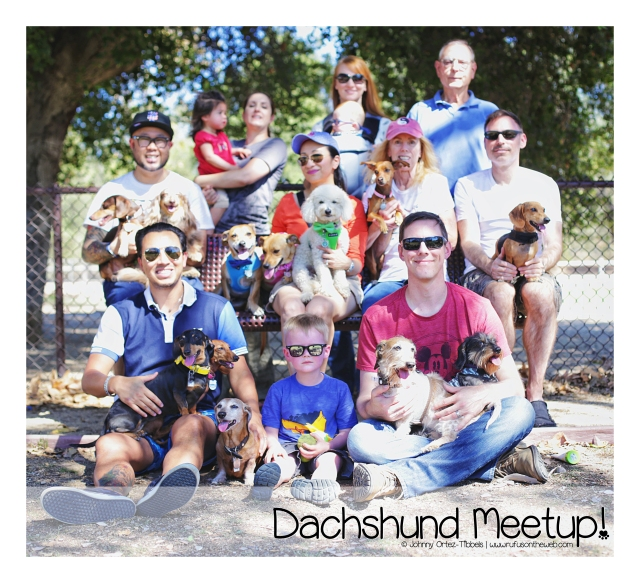 Dachshund Meetup Sunday Funday | September 2016.  Photo by: Johnny Ortez-Tibbels ©