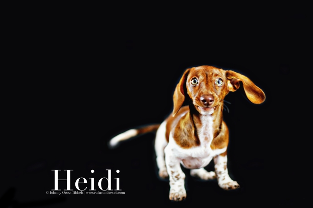 Heidi | September 2016. Photo by: Johnny Ortez-Tibbels ©