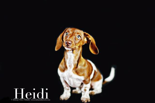 Heidi   September 2016. Photo by: Johnny Ortez-Tibbels ©