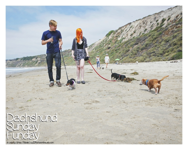 Dachshund Sunday Funday Beach Meetup August 2017 © Johnny Ortez-Tibbels | www.Rufusontheweb.com