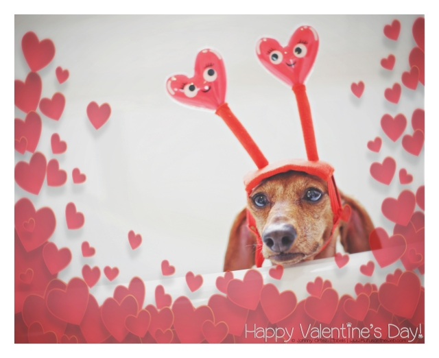 Happy Valentine's Day © Johnny Ortez-Tibbels | www.Rufusontheweb.com