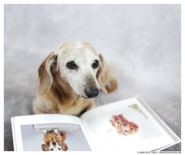 Rufus' Super Sweet Sixteen Book